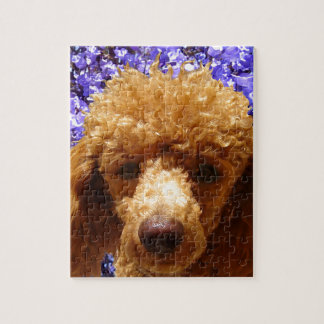 Cute Poodle Jigsaw Puzzles
