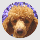 Cute Poodle Round Sticker