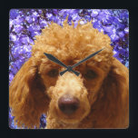 """Cute Poodle Square Wall Clock<br><div class=""""desc"""">Cute Poodle was created with digital photography and digital painting techniques. Pumpkin is one of my favorite dog friends.</div>"""