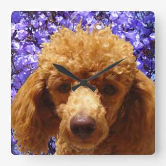 Cute Poodle Square Wall Clock