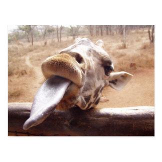 Cute Pose By Giraffe Postcard