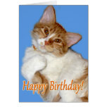 Cute Posing Cat - Birthday General Greeting Card