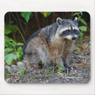 Cute Posing North American Raccoon Mouse Pad