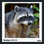 """Cute Posing North American Raccoon Wall Decal<br><div class=""""desc"""">Add a touch of nature and wonder to your walls with this wildlife-themed decal! The perfect choice for bird lovers! A mid-summer walk around Stanley Park&#39;s Lost Lagoon yielded the surprise of a raccoon. In fact, this one quietly preceded us, like a tour guide, for a hundred yards, to the...</div>"""