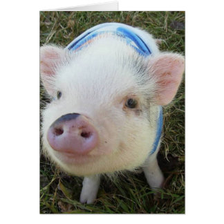 Cute Pot Belly Pig Greeting Card