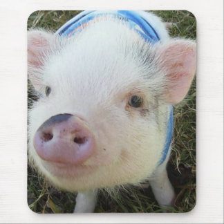 Cute Pot Belly Pig Mouse Pad