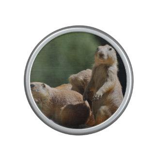 Cute Prairie Dogs Speaker