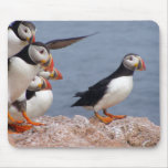 Cute Puffins Mousepad Mouse Pad