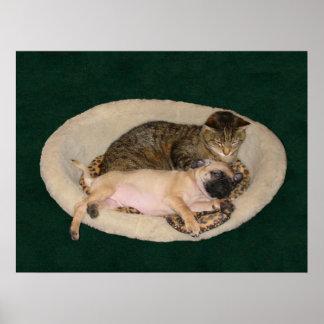 Cute Pug & Cat Poster