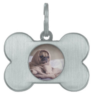 cute pug!! Cutest Pug You have ever seen! Pet Tag