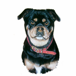 cute pug dog animal portrait art sculpture magnet photo sculpture magnet