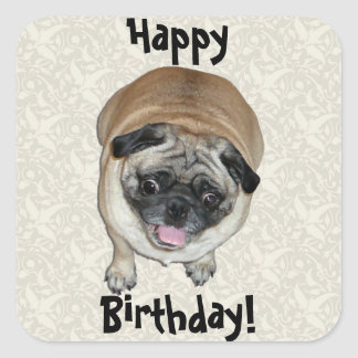 Cute Pug Dog Birthday Square Sticker