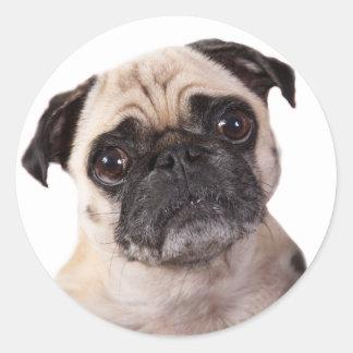 cute pug dog classic round sticker