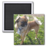 Cute Pug Dog Magnet