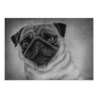 Cute Pug Dog Poster