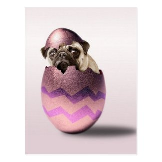 Cute Pug Easter Egg Design Postcard