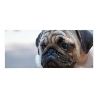 Cute Pug Face Closeup Card