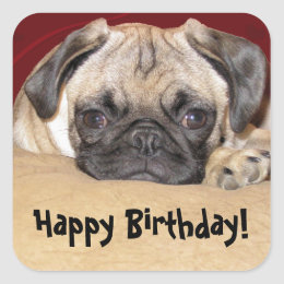 Cute Pug Puppy Birthday Wish Square Sticker