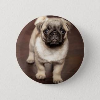 Cute Pug Puppy Button