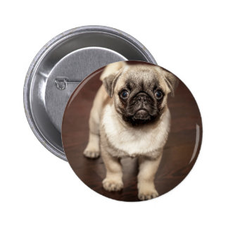 Cute Pug Puppy Button