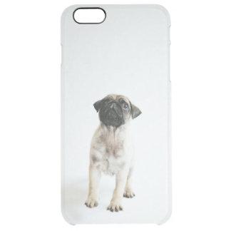 Cute Pug Puppy Clear iPhone 6 Plus Case