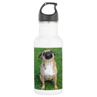 Cute Pug Stainless Steel Water Bottle