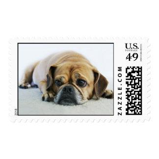 Cute Puggle Postage