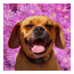 Cute Puggle Posters