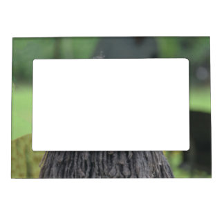 Cute Puli Dog Picture Frame Magnets