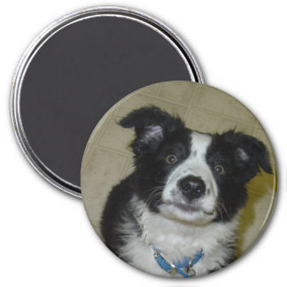 Cute Pup Magnet