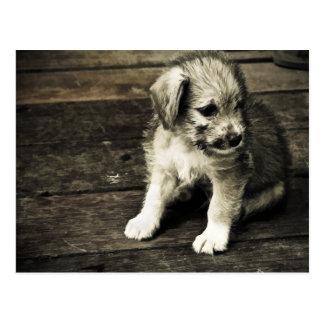 Cute Puppy Card Postcard
