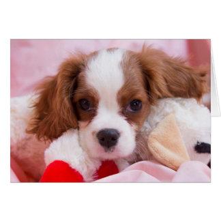 Cute Puppy Cavalier King Charles Greeting Card
