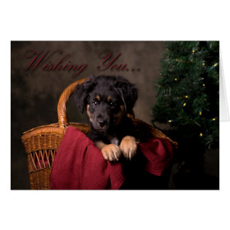 Cute Puppy Christmas Card