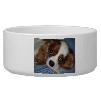 Cute Puppy Dog Bowl