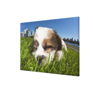 Cute puppy dog in park, Vancouver, BC, Canada. Canvas Print