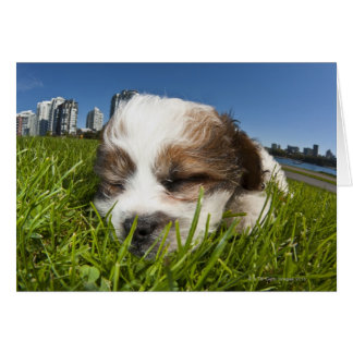 Cute puppy dog in park, Vancouver, BC, Canada. Card