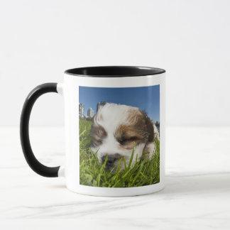 Cute puppy dog in park, Vancouver, BC, Canada. Mug