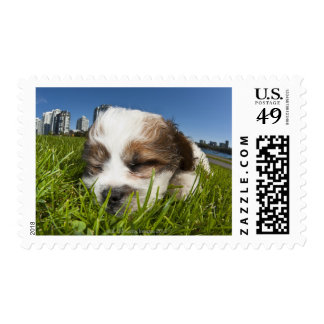 Cute puppy dog in park, Vancouver, BC, Canada. Postage