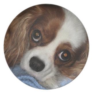 Cute Puppy Dog Plates