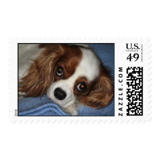 Cute Puppy Dog Postage Stamps