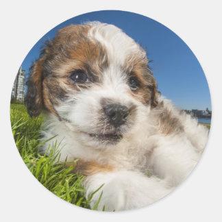 Cute puppy dog (Shitzu) Classic Round Sticker