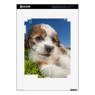 Cute puppy dog (Shitzu) iPad 3 Decal