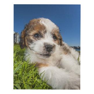 Cute puppy dog (Shitzu) Wood Wall Art