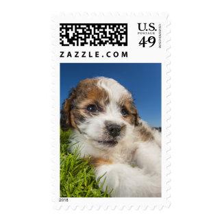 Cute puppy dog (Shitzu) Stamp