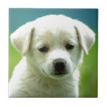 cute-puppy-dog-wallpapers.jpg ceramic tiles