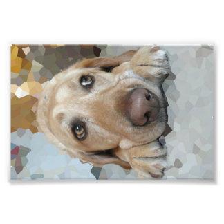Cute Puppy Eyes Print Photograph