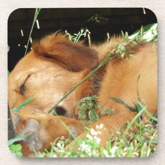 Cute Puppy Golden Labrador Retriever Sleeping Drink Coaster