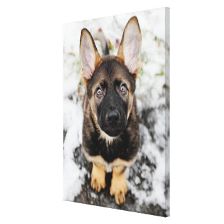 Cute Puppy Looking Up Canvas Print