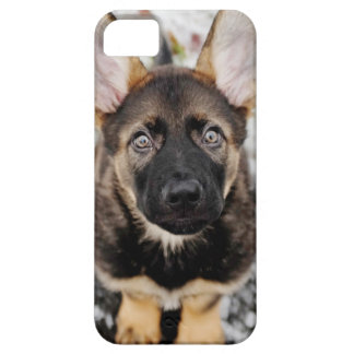 Cute Puppy Looking Up iPhone SE/5/5s Case