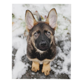 Cute Puppy Looking Up Panel Wall Art